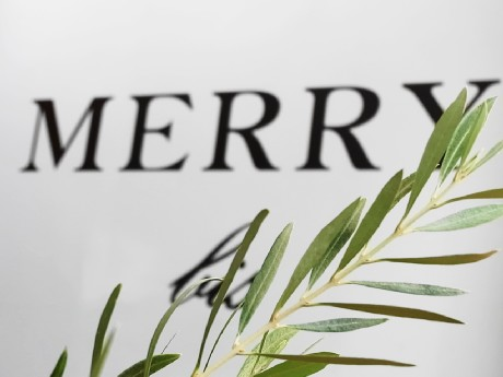 merry bis1.JPG